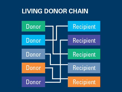 Living Kidney Donor Chain